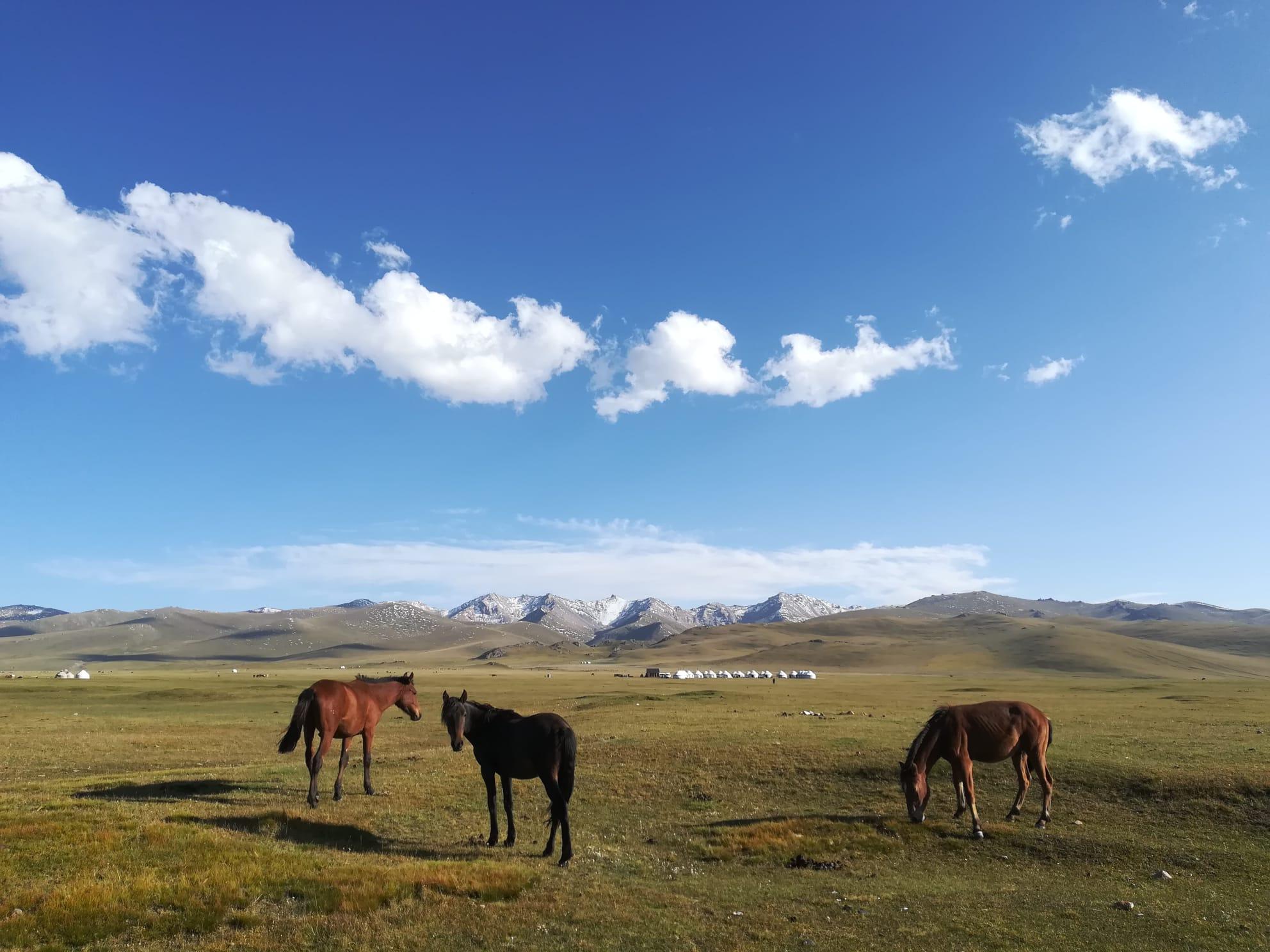 Pferde während dem Trekking