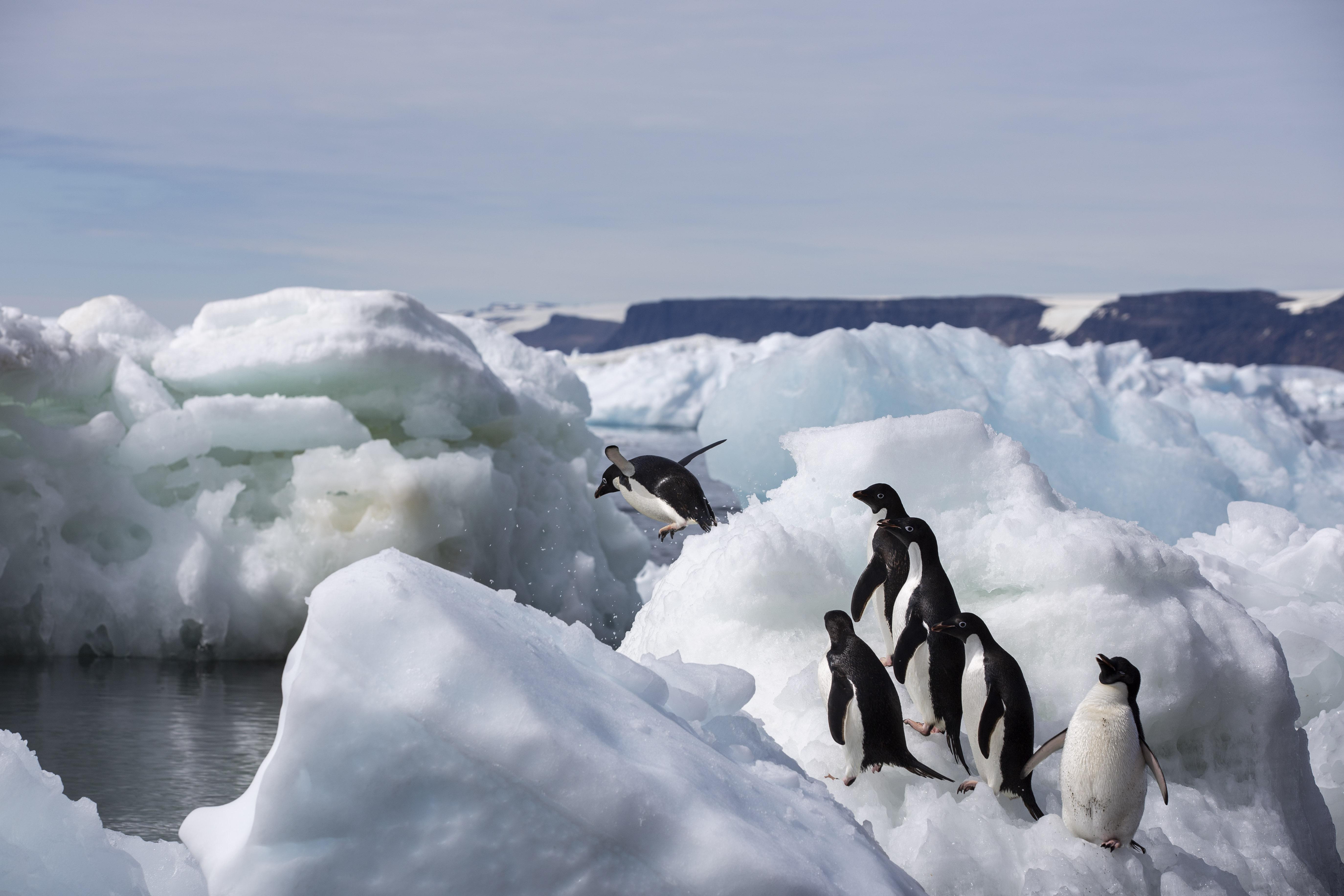 Antarctica_©_Patrick-Rohr_M4B7628.jpg